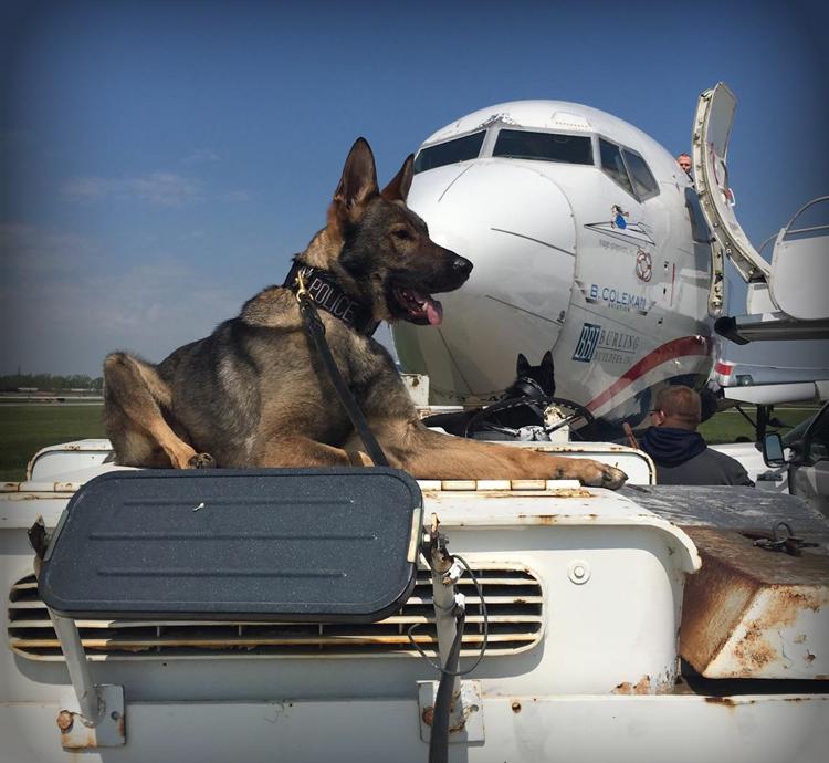 German Shepherd K9 Explosives Dog searching plane