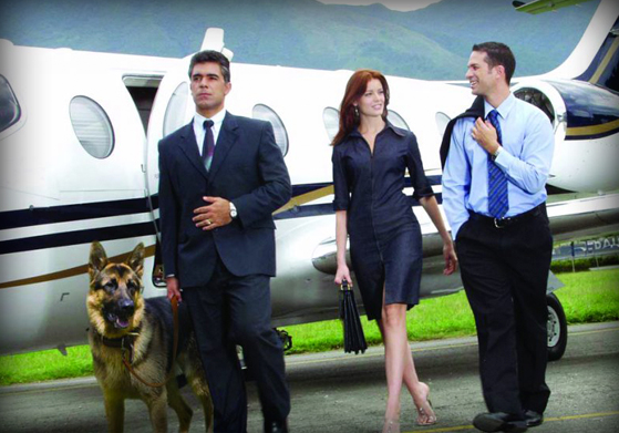 Executive protection dog  trained to protect high profile individuals