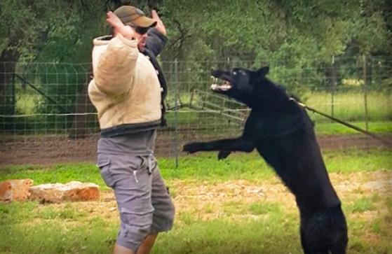 K9 Patrol Dog Worldwide Canine Inc.