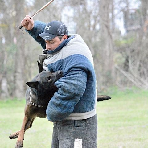 K9 Dog Trainer Alfonso Gonzalez of Worldwide Canine Inc.